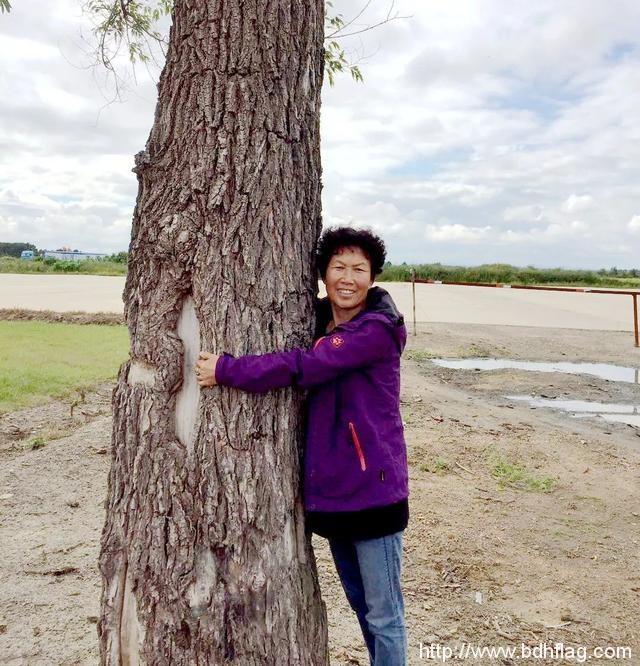 纪念开发建设北大荒60周年|家乡的那棵树